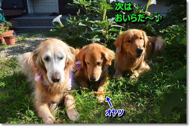 DSC_5947_20130725003612.jpg