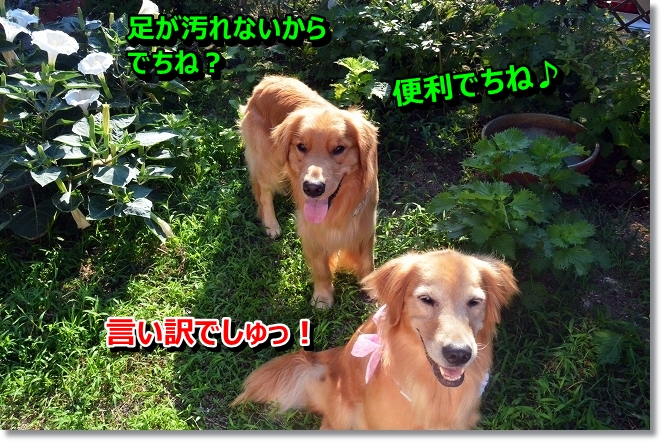 DSC_5954.jpg