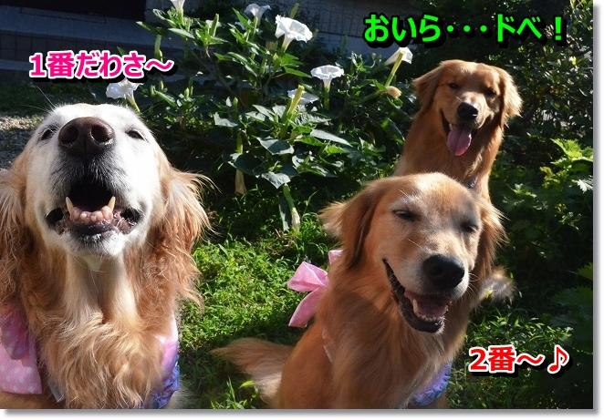 DSC_5958_20130725003736.jpg