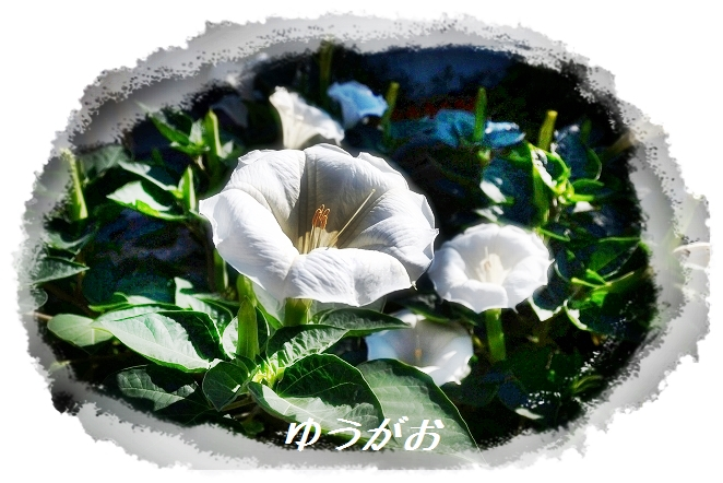 DSC_5960_20130725003738.jpg
