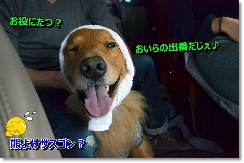 DSC_6078_20141115202940c5e.jpg