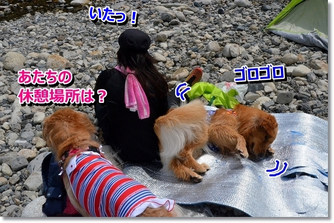 DSC_6411.jpg