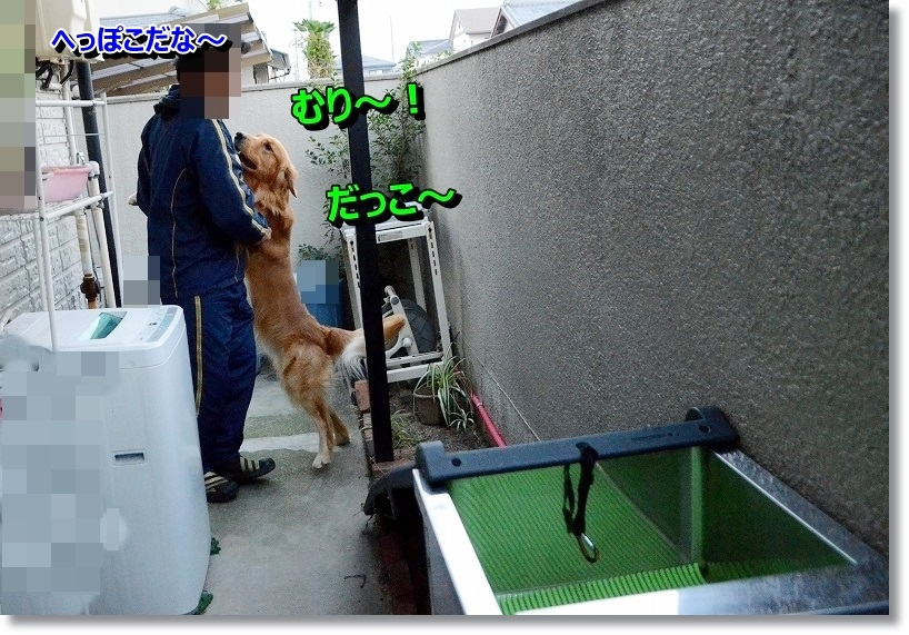 DSC_6537_20141109175908775.jpg