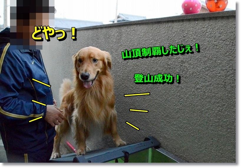 DSC_6544_201411091759337e0.jpg