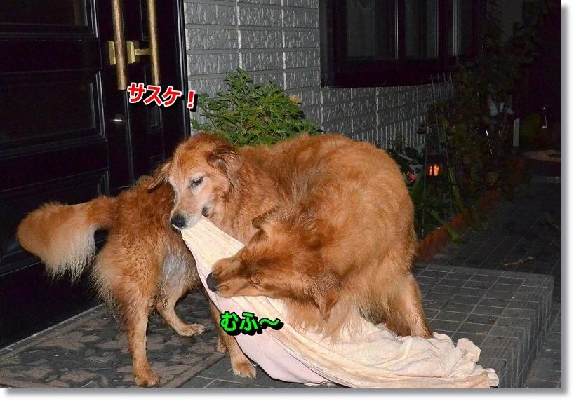 DSC_6635_201411101937539ed.jpg
