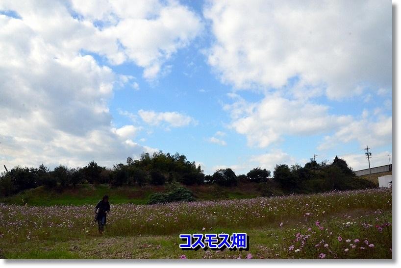 DSC_6713_20141122192359b3b.jpg