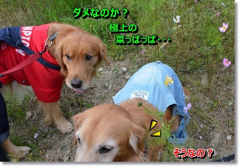 DSC_6719_201411221924030a3.jpg