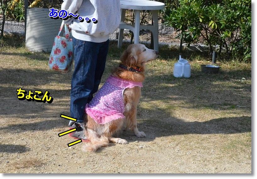 DSC_6939_2014112600464694f.jpg