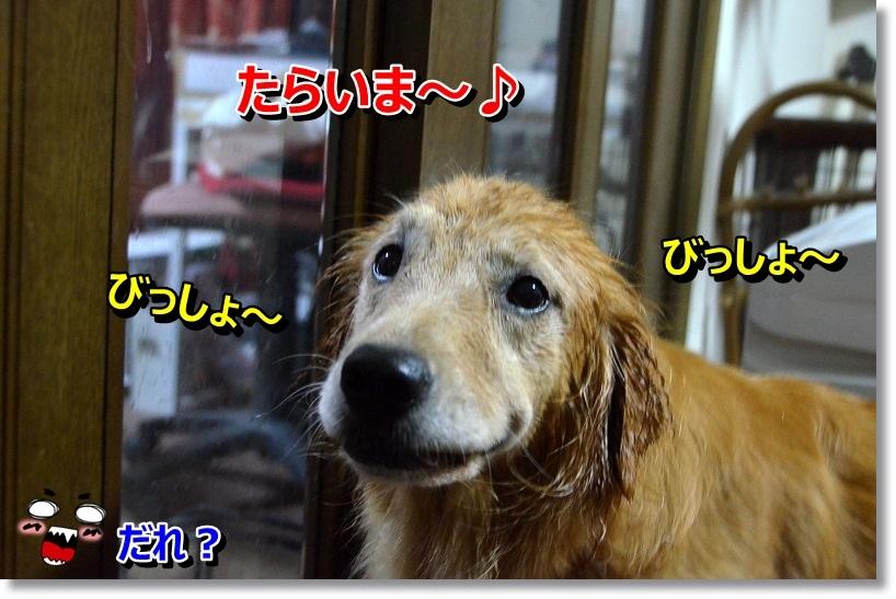 DSC_8897_20141025000519df4.jpg