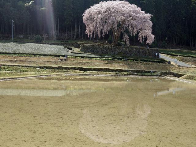 田んぼの水に映る