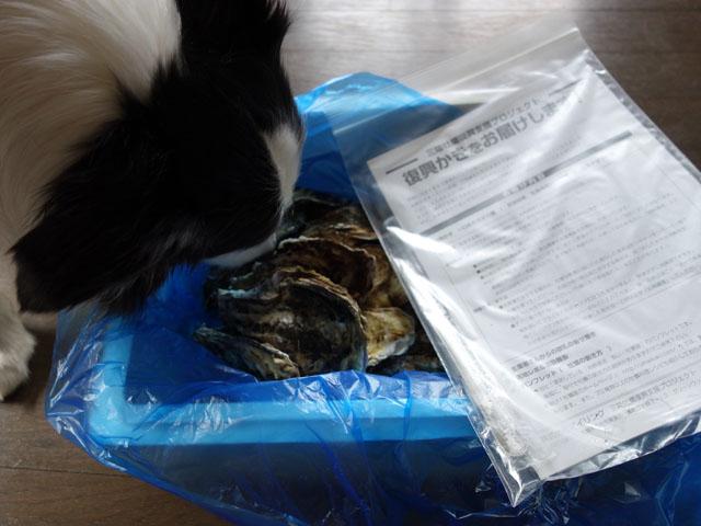 復興牡蠣が届いた