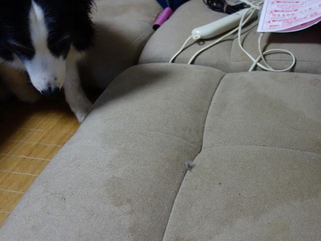 ソファーにオシッコ