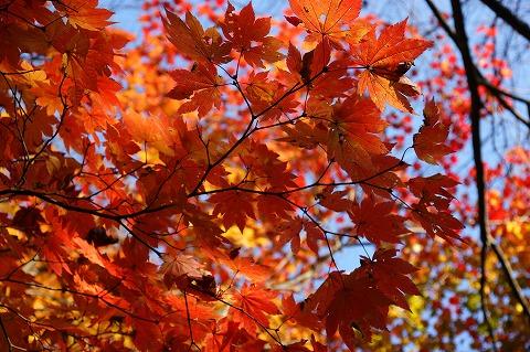 大滝山公園DSC04828