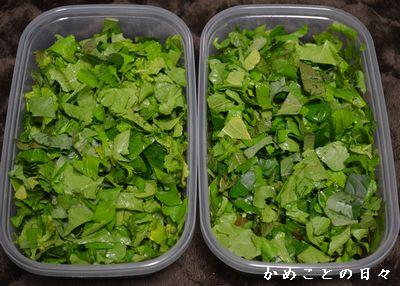 DSC_0140-food.jpg
