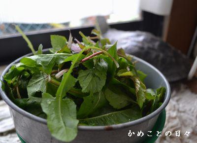 DSC_0188-yaso.jpg