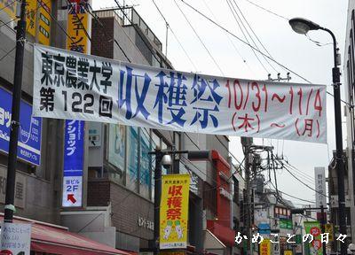 DSC_0343-shuu.jpg