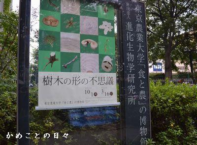 DSC_0396-sho.jpg