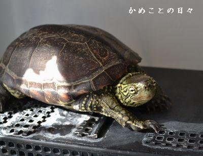 DSC_0532-suke.jpg