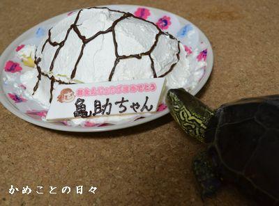 DSC_0595-suke.jpg