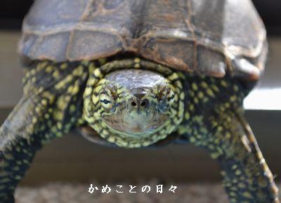 DSC_0624-suke.jpg