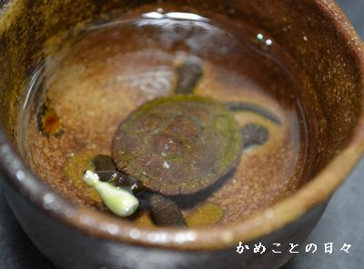DSC_0675-sake.jpg