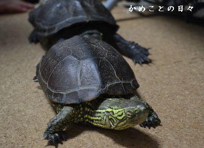 DSC_0726-sukeco.jpg