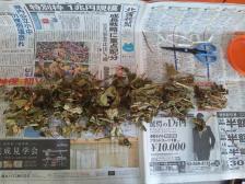 ドクダミ茶 (3)