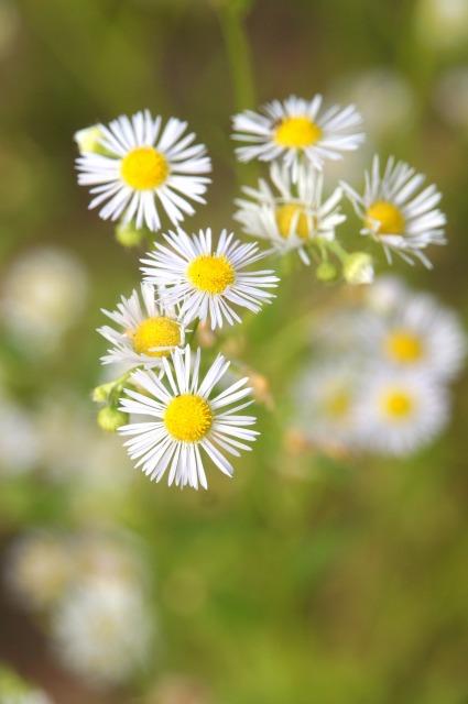 野辺の花②