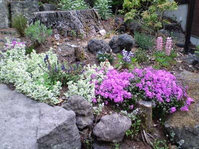 春の花お客様庭