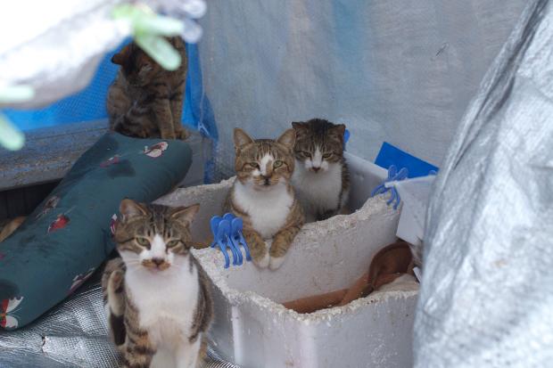 雨の中の猫たち