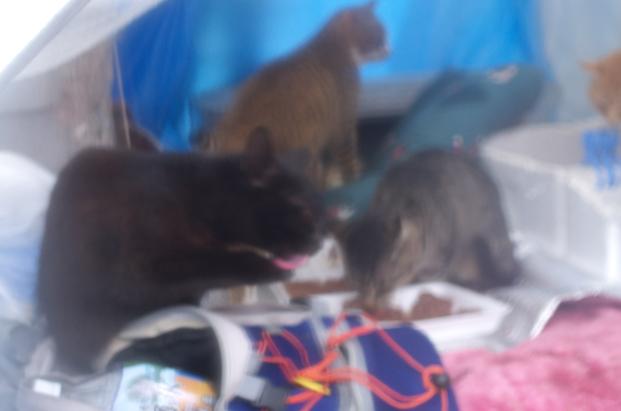 雨の中の猫たち5