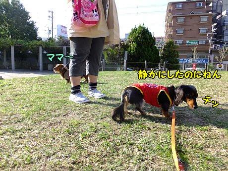 DSCF7119_20131030171048c6e.jpg