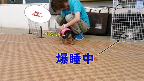 DSC_0000014.jpg