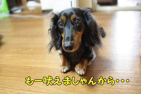 IMG_8015.jpg