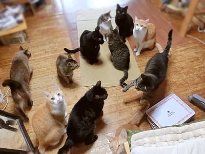 「ご飯はそろそろ出て来るはず、、」と待ち続けるにゃんず