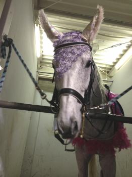 130523誘導馬タカノさん
