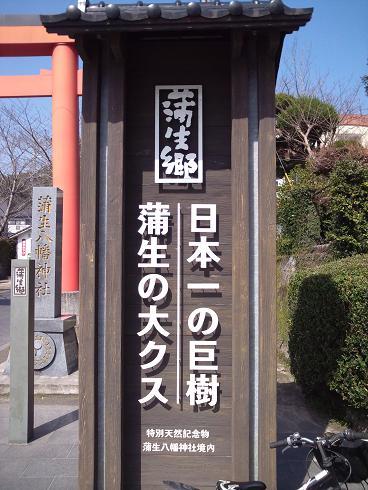 日本一の大クス