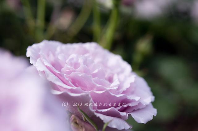 2013_nakanoshima_rose6