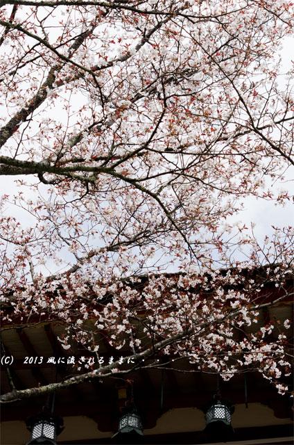 2013年 桜を探して・・・ 奈良・談山神社の桜5