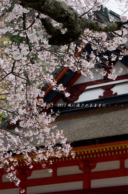 2013年 桜を探して・・・ 奈良・談山神社の桜6