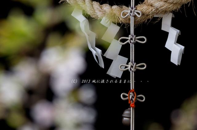 2013年 桜を探して・・・ 奈良・談山神社の桜7