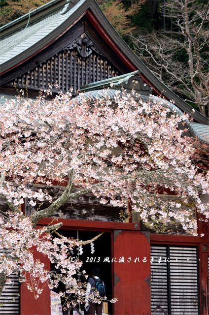 2013年 桜を探して・・・ 奈良・談山神社の桜9