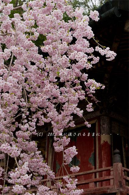 2013年 桜を探して・・・ 奈良・談山神社の桜10