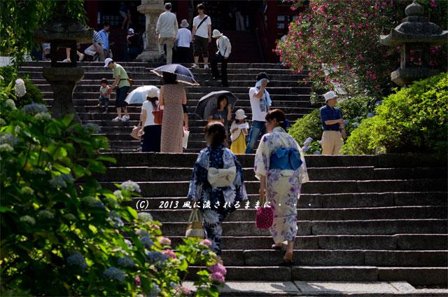 2013年 奈良・矢田寺のアジサイ10
