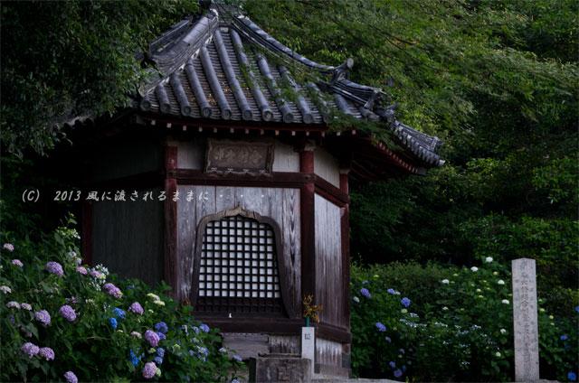 2013年 奈良・矢田寺のアジサイ12