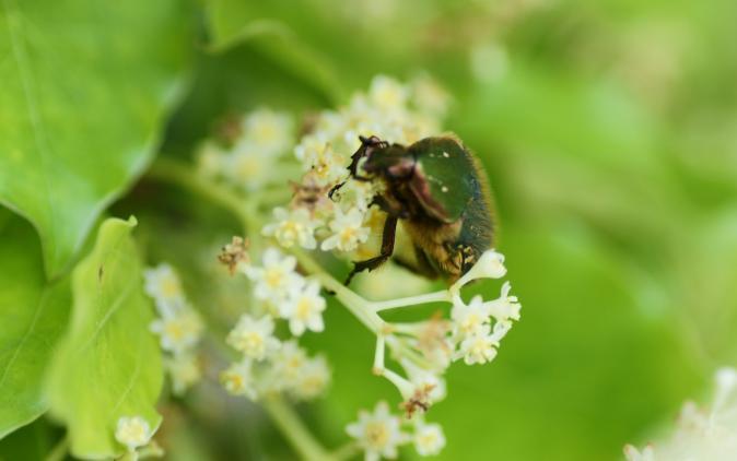 DSC01490昆虫