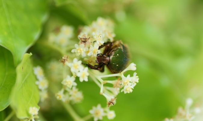 DSC01479昆虫
