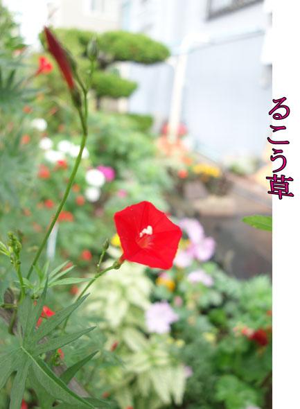 13-08-01_2086.jpg