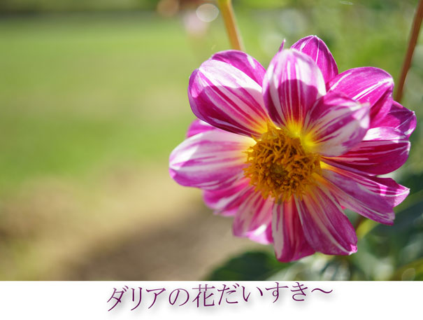 13-08-25_2224.jpg