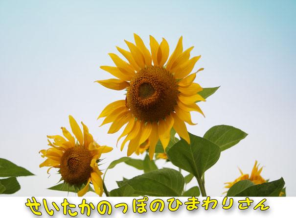 13-08-31_2256.jpg